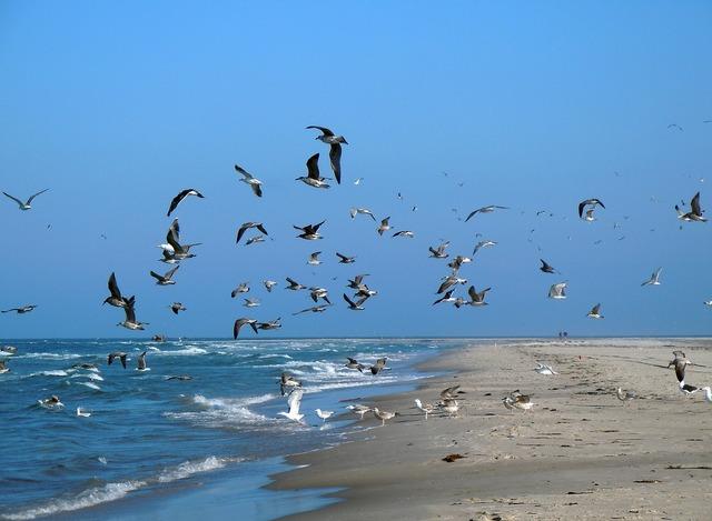 Gulls beach sea, travel vacation.