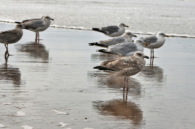Gulls sea animal birds, travel vacation.