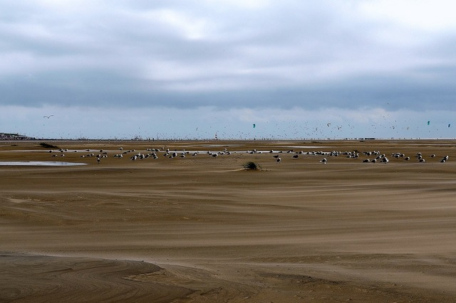 Gulls sea birds borkum, travel vacation.