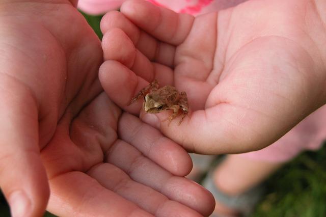Hands żabka child care.