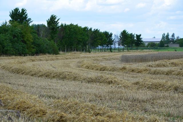 Harvest grain harvest agriculture.