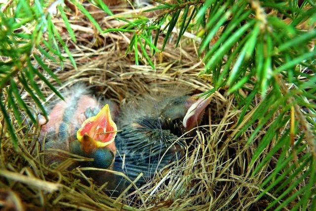 Hatched chicks bird, animals.