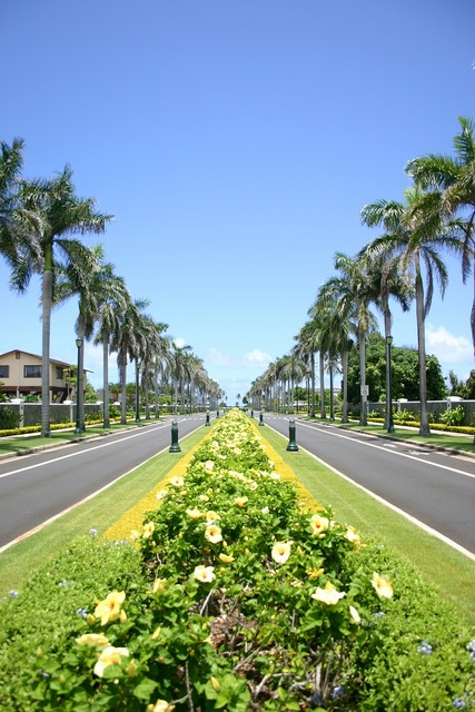 Hawaii avenue palm trees, transportation traffic.