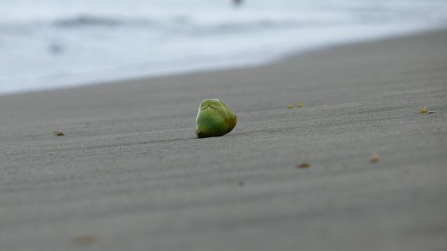 Hawaii kawaii coconut, travel vacation.