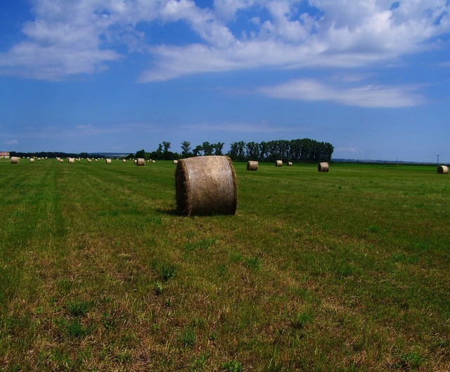 Hay bale forage mown field.
