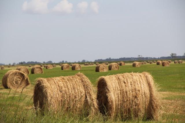 Hay field agri.