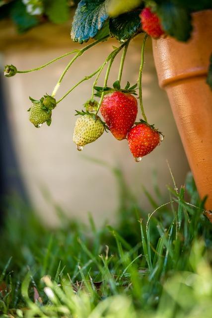 Health plant garden, health medical.