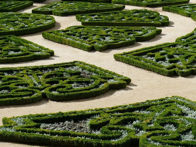 Hedge boxwood garden, backgrounds textures.