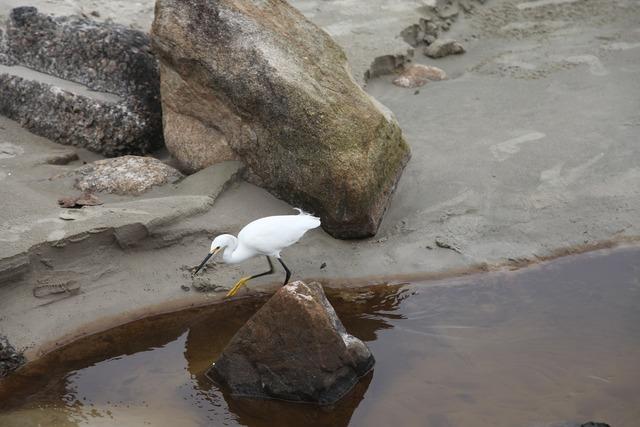 Heron beach birds, travel vacation.