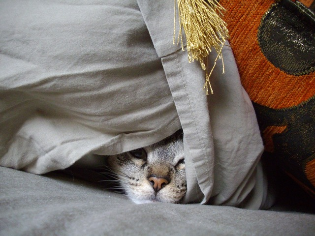 Hideout cat pet, animals.
