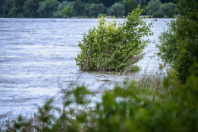 High water river bush, science technology.