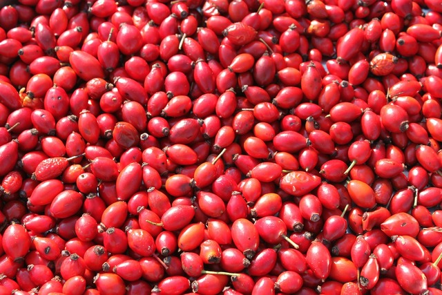 Hips pomaceous red, food drink.