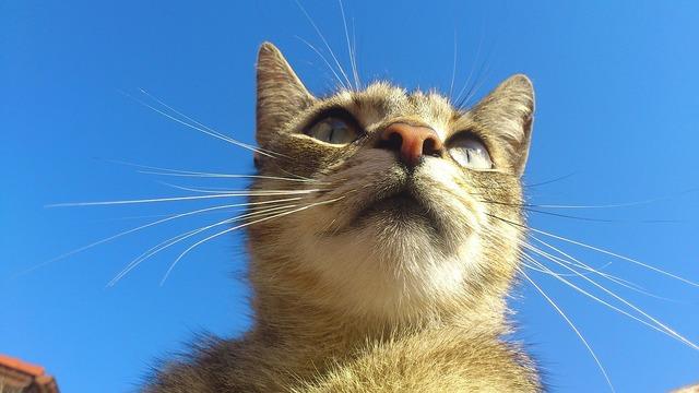 Homemade cat felines, animals.