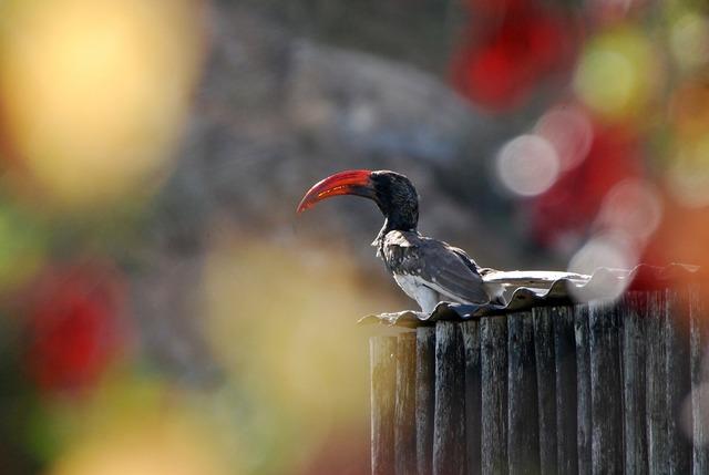 Hornbill bird bill, animals.