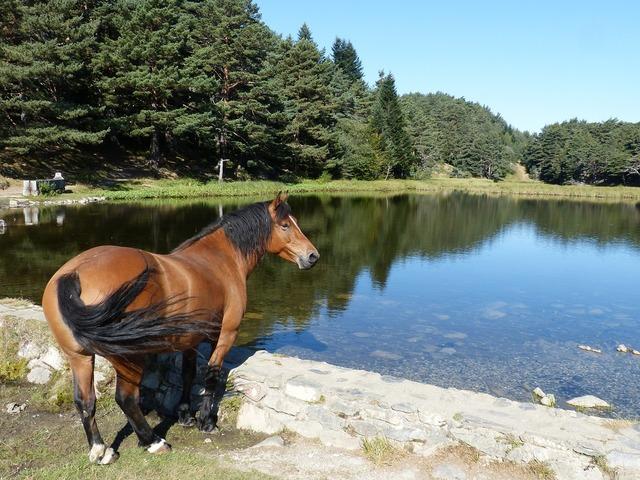 Horse bassa d'oles val d'aran.