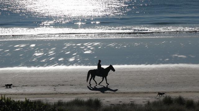 Horse beach new zealand, travel vacation.