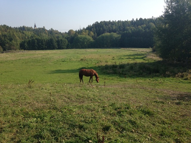 Horse bed summer.