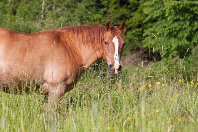 Horse brown fuchs.