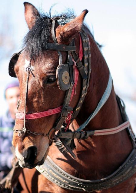Horse brown pet, animals.