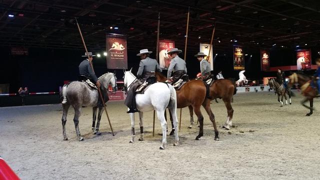 Horse equestrian show.