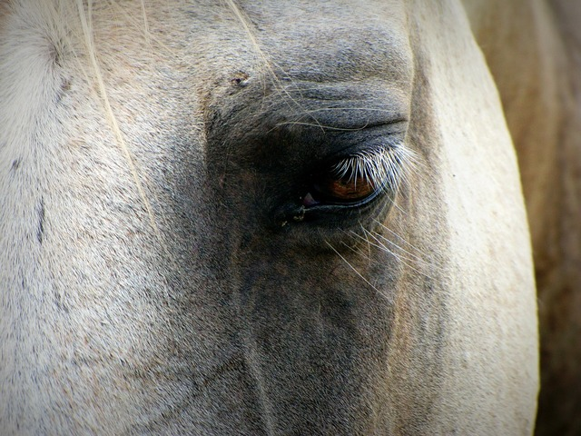 Horse face eye, animals.
