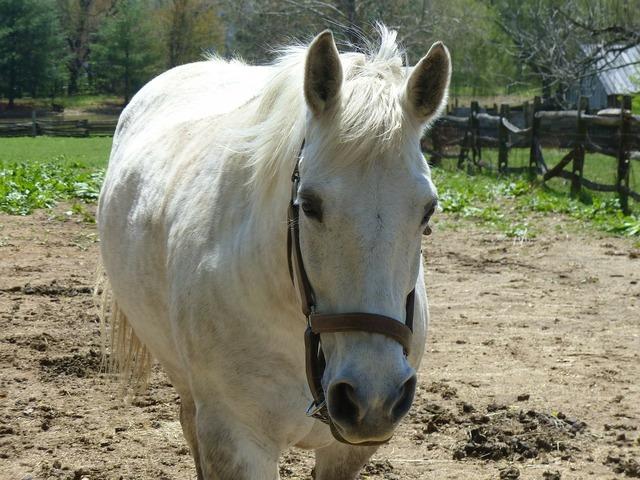 Horse farm animal pet, animals.