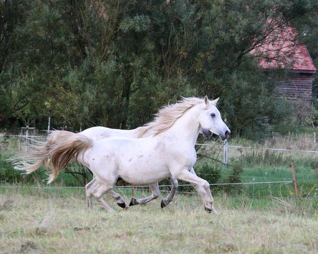 Horse gallop mold.