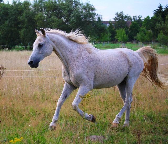 Horse gallop pasture.