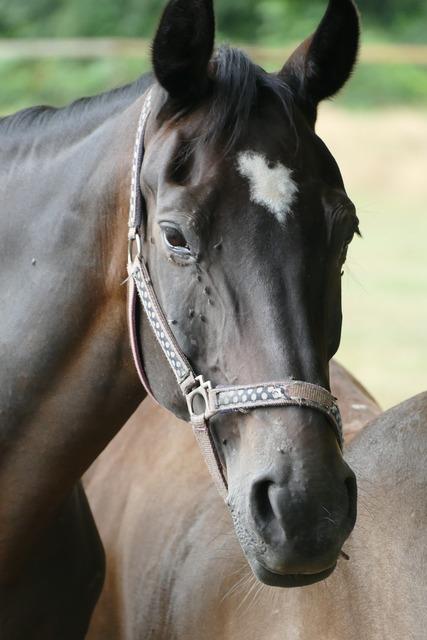 Horse head horse pallor.