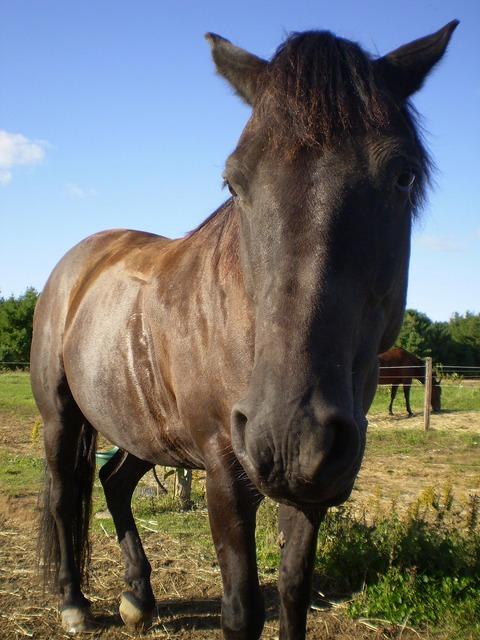 Horse head stallion, animals.