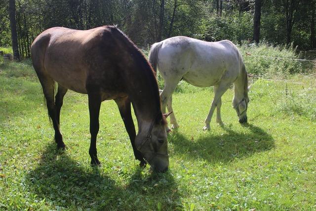 Horse horses grass.