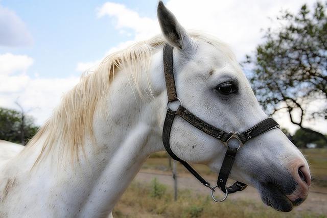 Horse mane horses.