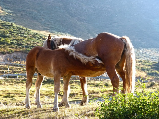 Horse mare colt.