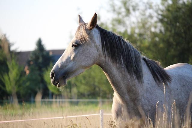 Horse mold mare.