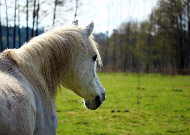 Horse mold pasture.