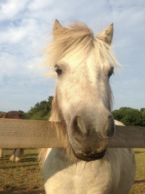 Horse pony head.