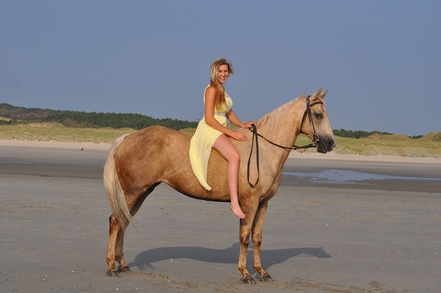 Horse quarter horse beach, travel vacation.