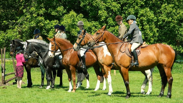 Horse rider show, sports.