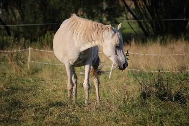 Horse thoroughbred arabian pasture.