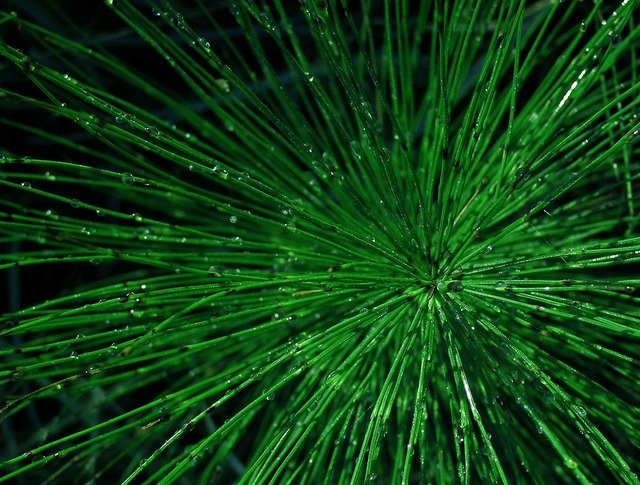 Horsetail green drops, nature landscapes.