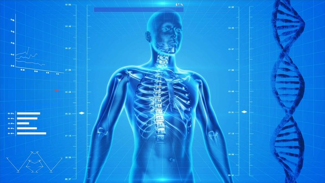Human skeleton the human body anatomy, health medical.