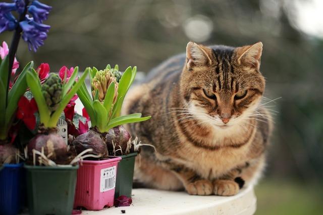 Hyacinths cat plantations, animals.