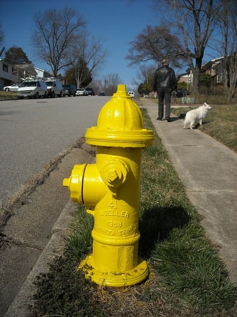 Hydrant street dog, transportation traffic.