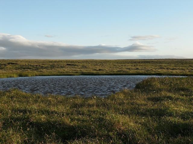 Iceland lake grass.