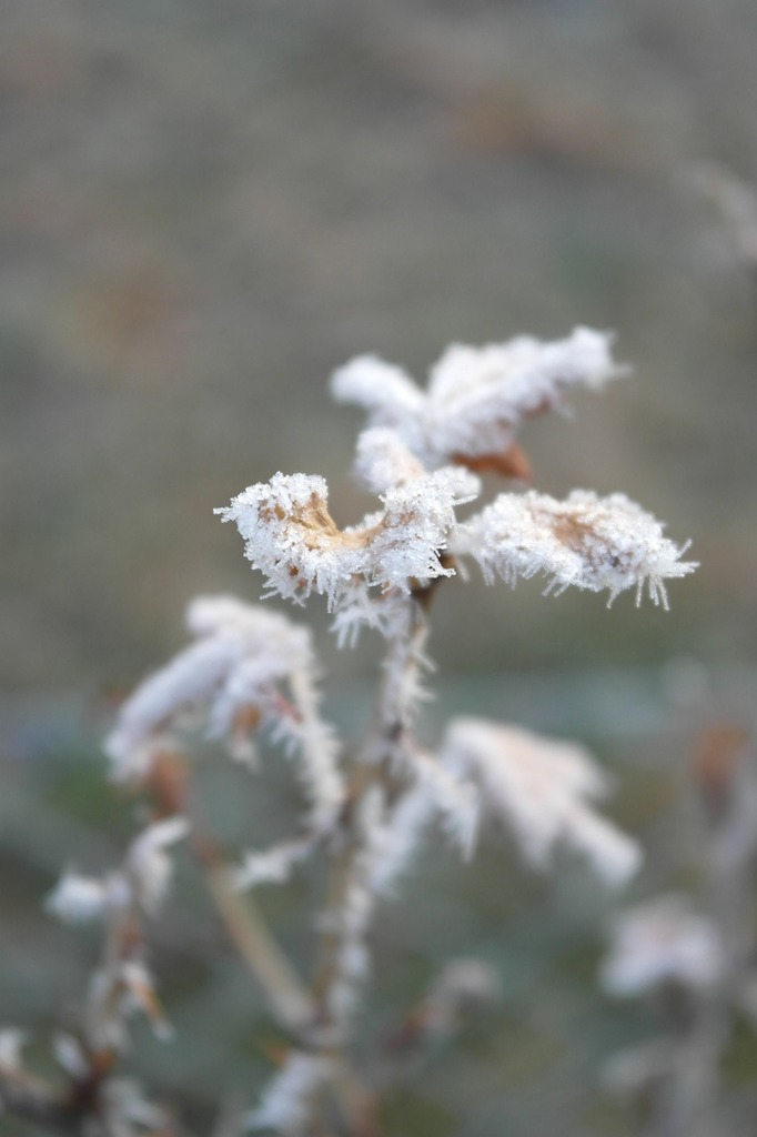 Icing frost detail, nature landscapes.