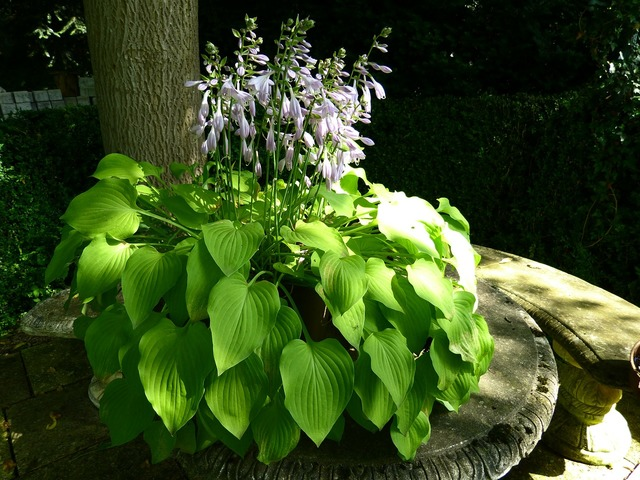 Idyll garden bench plant, nature landscapes.