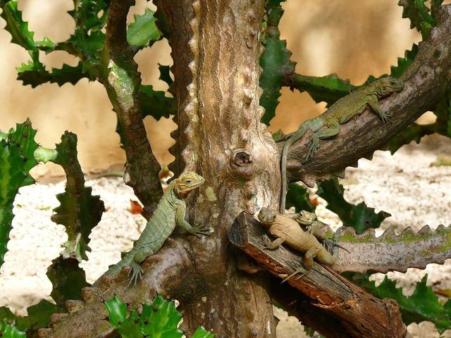 Iguanas tree animal, animals.