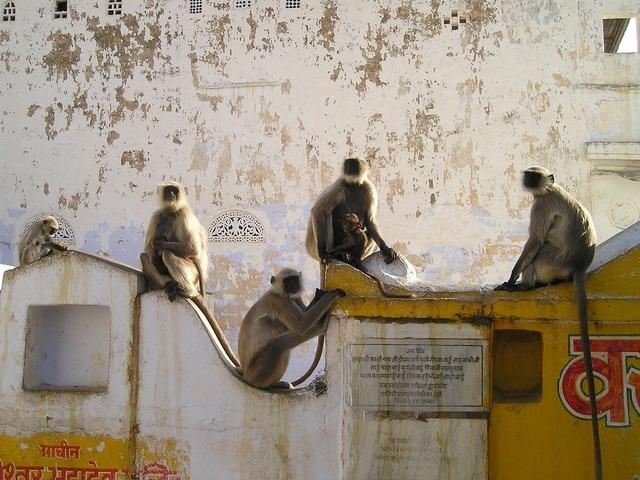 India ape ape horde.