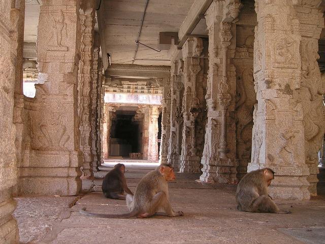 India ape temple, religion.