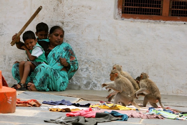 India family ape, people.